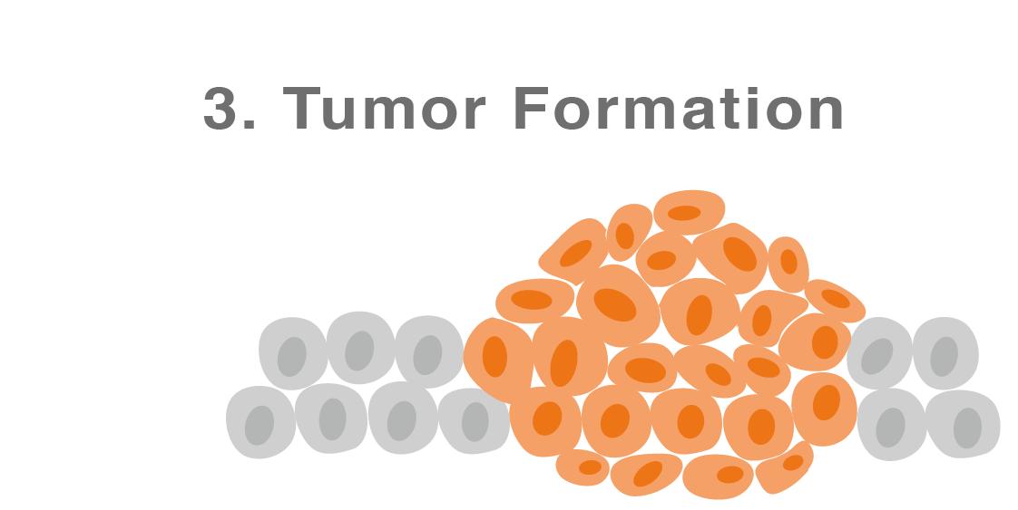 cancer formation